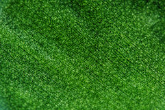 Abstracte groene achtergrond, installatieblad, Macro Extreme close-up stock afbeelding
