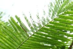 Abstracte groene bladeren op aardachtergrond Royalty-vrije Stock Afbeeldingen