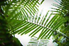 Abstracte groene bladeren op aardachtergrond Royalty-vrije Stock Afbeelding