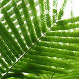Abstracte groene bladeren op aardachtergrond Royalty-vrije Stock Foto