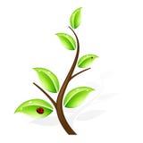 Abstracte groene boom Stock Afbeelding