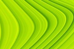 Abstracte Groene Krommentextuur voor Achtergrond stock afbeeldingen