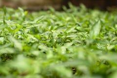 Abstracte groene onduidelijk beeldgrassen als achtergrond Stock Afbeeldingen