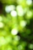 Abstracte groene vage achtergrond Royalty-vrije Stock Afbeeldingen