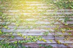 Abstracte groene verlof houten muur Royalty-vrije Stock Foto