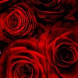 Abstracte grunge geweven achtergrond met rozen Royalty-vrije Stock Fotografie