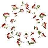 Abstracte Haagdoorn Berry Wreath stock foto