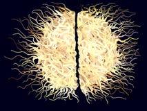 Abstracte Harige Hersenen Stock Afbeeldingen