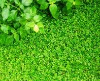 Abstracte heldere achtergrond met groene bladeren Stock Afbeelding