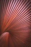 Abstracte houten structuur Stock Foto's