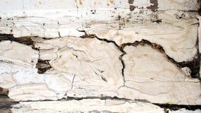 Abstracte houten textuur Stock Fotografie