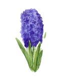 Abstracte hyacintbloem Royalty-vrije Stock Foto