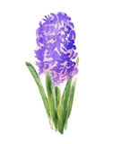 Abstracte hyacintbloem Royalty-vrije Stock Afbeeldingen