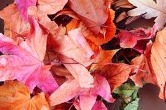 Abstracte kleurenbladeren Royalty-vrije Stock Fotografie
