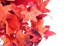 Abstracte kleurenbladeren Royalty-vrije Stock Afbeeldingen