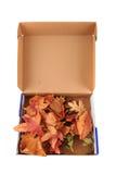Abstracte kleurenbladeren in de doos Royalty-vrije Stock Afbeelding