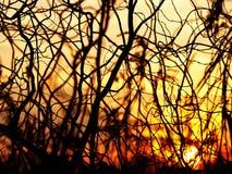 Abstracte krommen van een boom bij zonsondergang Stock Afbeeldingen