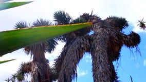 Abstracte kunst, achtergrond van de palmen de blauwe hemel stock footage