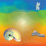 Abstracte kunst van shell op het strand Stock Afbeeldingen
