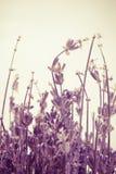 Abstracte lavendel Royalty-vrije Stock Fotografie