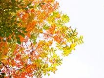 Abstracte levendige kleurenbladeren op boom Stock Fotografie