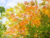 Abstracte levendige kleurenbladeren op boom Royalty-vrije Stock Afbeeldingen