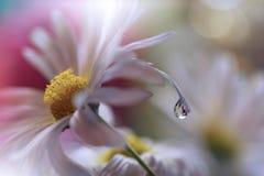 Abstracte macrofoto met waterdalingen Royalty-vrije Stock Foto's