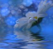 Abstracte macrofoto met waterdalingen Zeep, handdoek en bloemensneeuwklokjes Royalty-vrije Stock Afbeeldingen