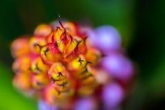Abstracte macrofoto van oranje, purpere en roze bloem stock foto's