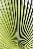 Abstracte macrowoestijninstallatie Stock Afbeeldingen