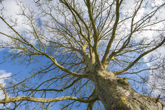 Abstracte mening van een naakte boom in de winter Royalty-vrije Stock Afbeelding