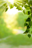 Abstracte milieuachtergronden Royalty-vrije Stock Foto