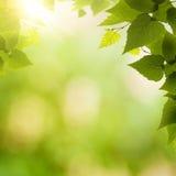 Abstracte milieuachtergronden Stock Foto