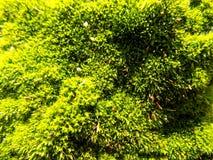 Abstracte mooie groene mosachtergrond De achtergronden van het aardbehang Stock Foto's