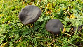 Abstracte mooie zwarte paddestoelachtergrond De achtergronden van het aardbehang Royalty-vrije Stock Foto