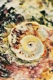 Abstracte mosselen royalty-vrije stock fotografie