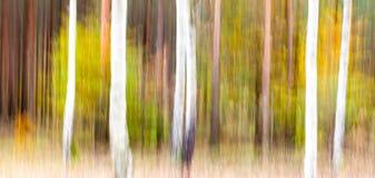Abstracte motie vage bomen in een bos stock afbeelding
