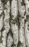 Abstracte natuurlijke achtergrond Stock Foto's