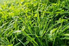 Abstracte natuurlijke achtergrond door het gras Stock Foto's
