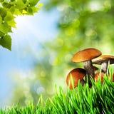 Abstracte natuurlijke achtergronden Stock Fotografie