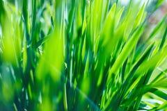 Abstracte natuurlijke achtergronden met schoonheid bokeh Stock Foto