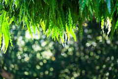 Abstracte natuurlijke groene bokeh van boomachtergrond aarddefocu royalty-vrije stock fotografie
