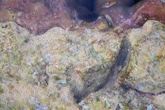 Abstracte Natuurlijke Onderwatertextuurachtergrond - Krommen en Ontwerpen op Stenen en Koralen royalty-vrije stock foto
