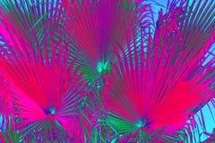 Abstracte Neon Bloemenachtergrond royalty-vrije stock fotografie