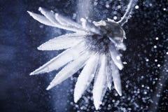 Abstracte onderwatersamenstelling met droge bloem, bellen en licht Stock Afbeeldingen