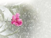 Abstracte onscherpe houten textuurachtergrond met roze bloem Royalty-vrije Stock Foto