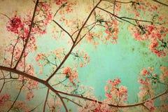 Abstracte retro achtergrond van Flam-boyant of pauwbloemen stock fotografie