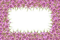 Abstracte rode purpere onbekende bloemenachtergrond Royalty-vrije Stock Afbeeldingen