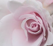 Abstracte Rose Background met waterdruppeltjes Royalty-vrije Stock Afbeeldingen