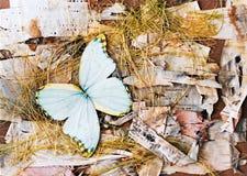 Abstracte samenstelling van vlinders, berkeschors en stro. Royalty-vrije Stock Foto's